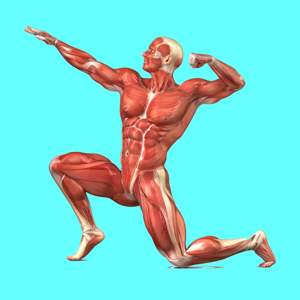 Muscular System Biology - Education app