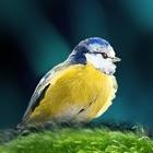 Oiseaux en poche icon