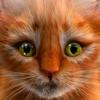 Mi gatito (simulador de gatos)