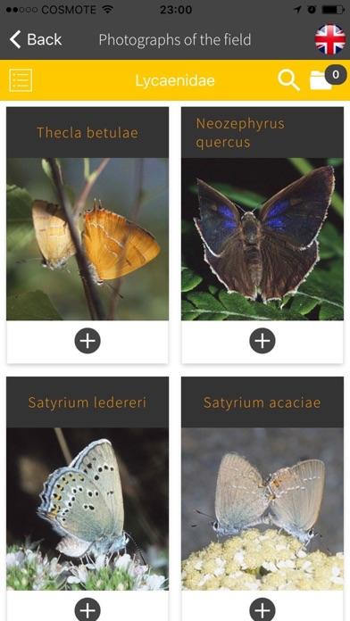 Butterflies of Greece