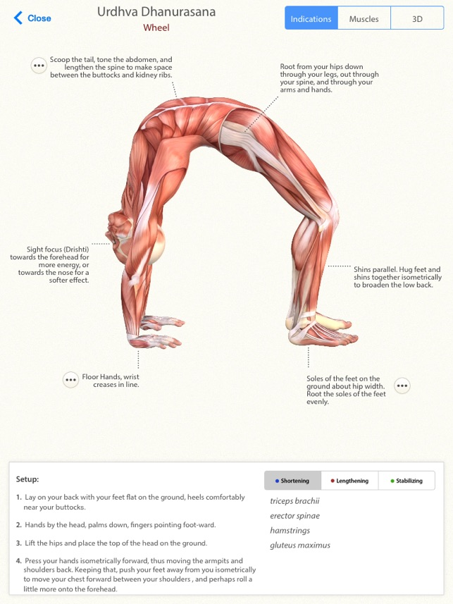 3D Yoga Anatomy Screenshot