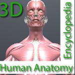 Human Anatomy Encyclopedia 3D