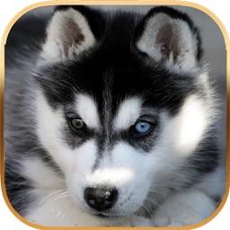 Talking Dog Virtual Pet Husky