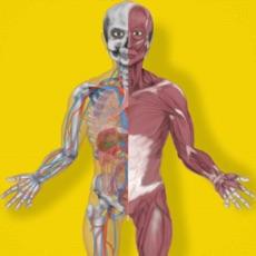 Activities of Inside The Human Body PREMIUM