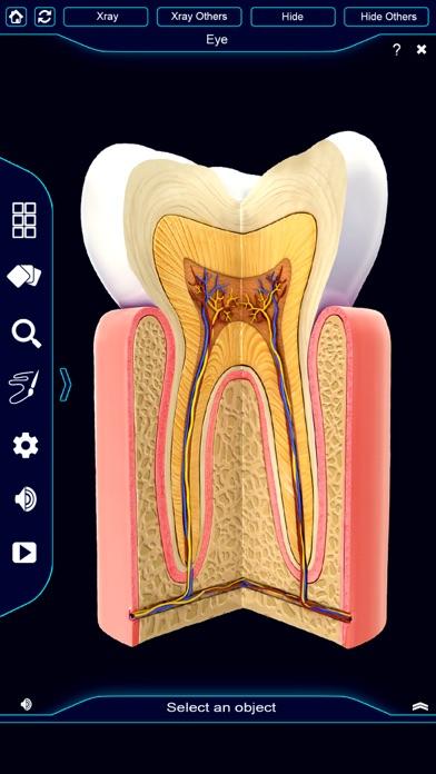 My Dental Anatomy App Price Drops