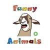 Funny Animals Animated