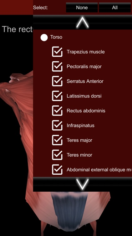 Muscular System 3D (anatomy) screenshot-3