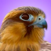 Ibird Pro Guide To Birds app review