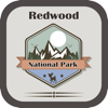Sanaboyina suresh - National Park In Redwood  artwork
