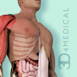 Undergrad Anatomy by System