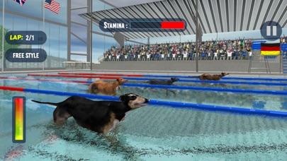 犬のスイミングレースのおすすめ画像5