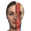 Interactive Anatomy - AE