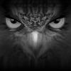 EagleEyes-lite