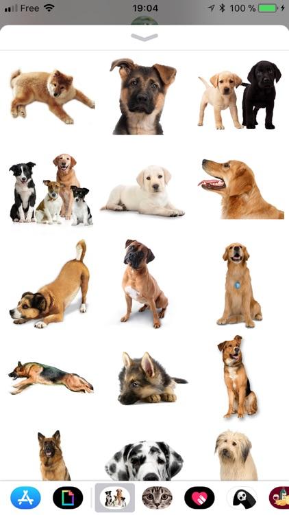 Dog screenshot-1