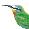 دليل الطيور في الشرق الأوسط