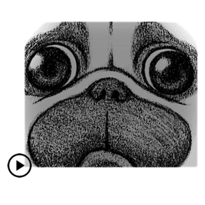 Animated Cute Pug Dog Stickers