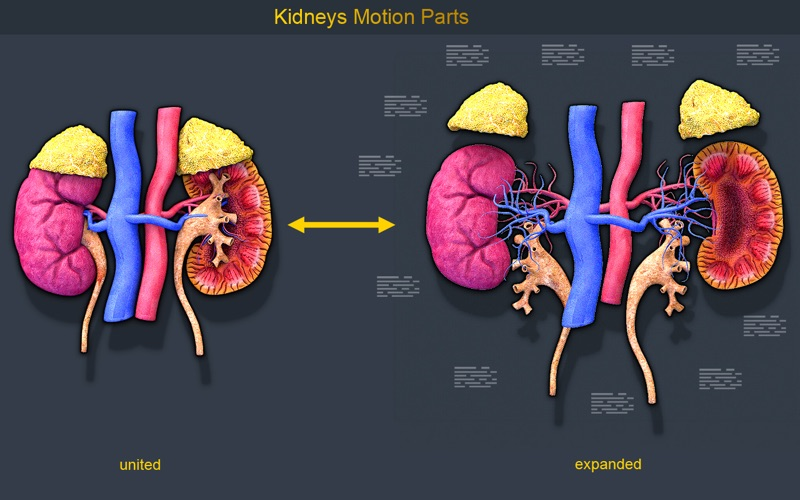 Kidney Motion скриншот программы 3