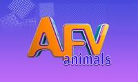 AFV animals