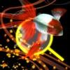金魚ドリーム - iPadアプリ