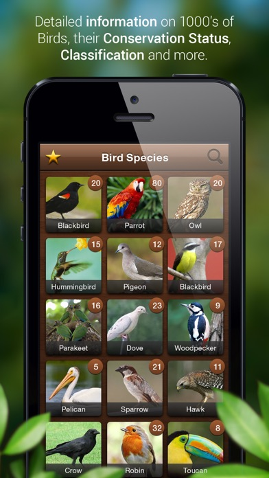 Bird Songs - Bird Call & Guide screenshot three