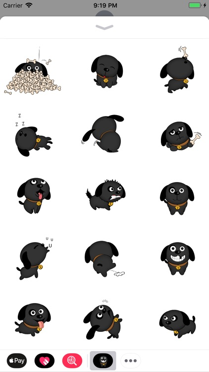 Cutest Black Dog