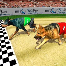 Dog Racing Tournament 2018