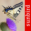 Butterfly Id - UK Field Guide