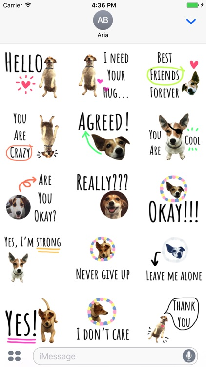 Chat With Jack Russell Dog