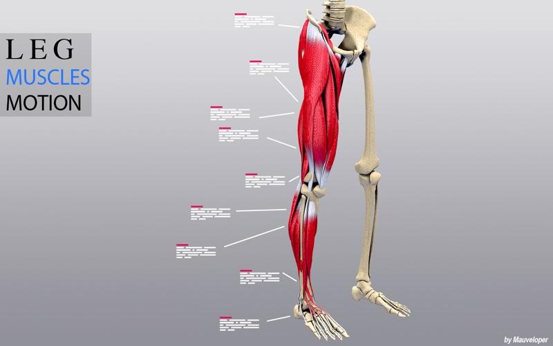 Leg Muscles Motion скриншот программы 1