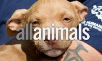 All Animals