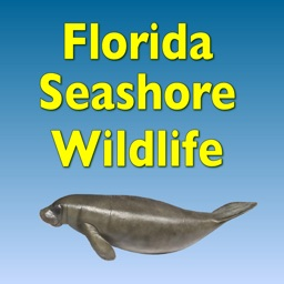 Florida Seashore Wildlife