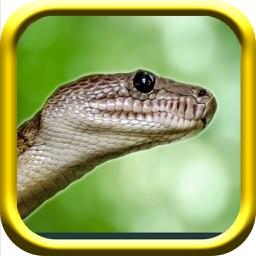 Snake Rampage - A Snake Simulator Game