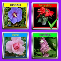 The Garden Quiz: Flowers