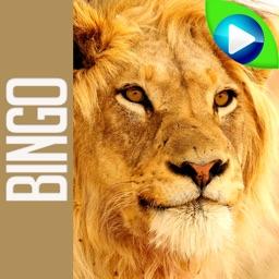 ANIMAL BINGO - Live Animal Bingo & Slots!