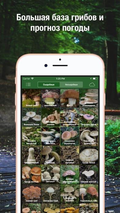 Screenshot for iГрибник: Грибы всего мира in Azerbaijan App Store