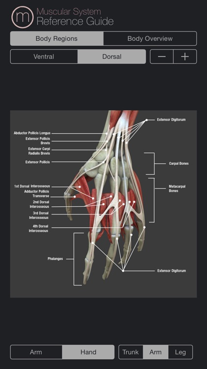 Human Muscular System Guide screenshot-2
