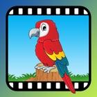 Video Touch - Wild Birds icon