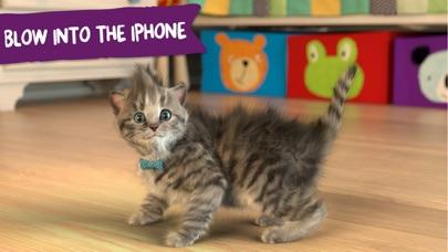 Little Kitten Screenshots