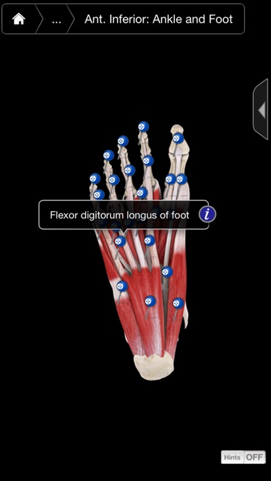 Muscle System Pro III - iPhone Edition Screenshot 3