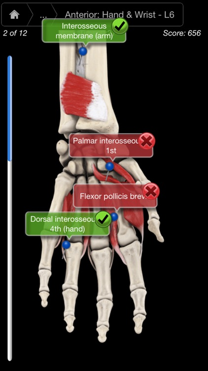 Muscle System Pro III - iPhone screenshot-4