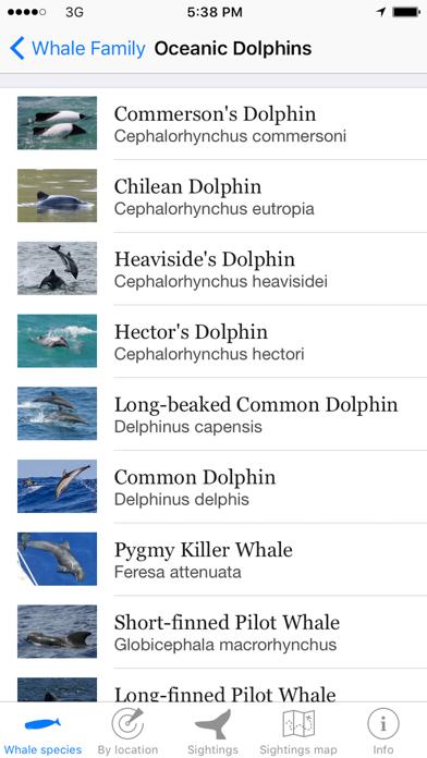 Whale Watching Screenshot