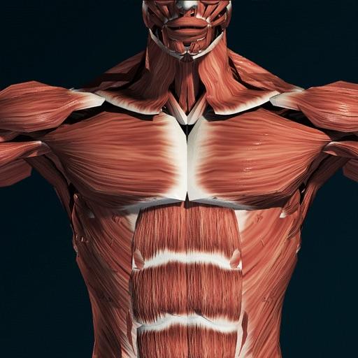 Sistema Muscular 3D (Anatomía) App Revisión - Medical - Apps Rankings!