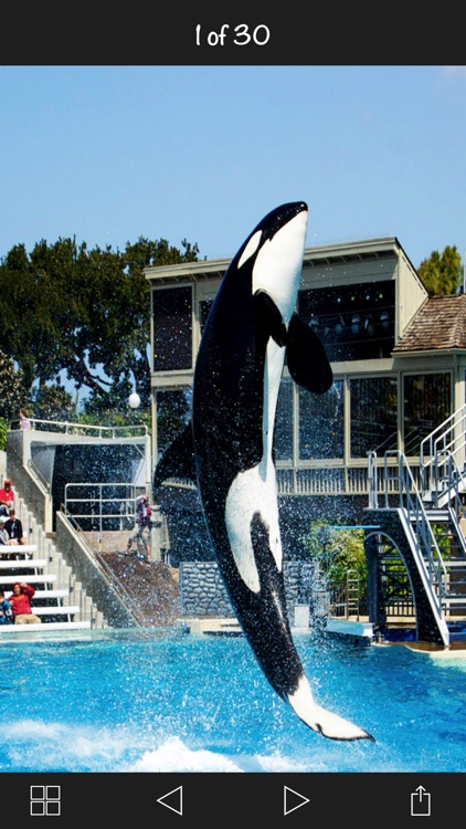 The SeaWorld San Diego screenshot-4