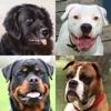 犬 - 写真付きクイズ、犬の品種一覧