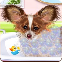 Papillon Puppy Day Care