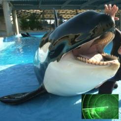 VR Guide: SeaWorld San Diego
