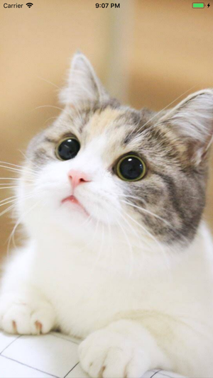 Cat Wallpapers Cute On The App Store