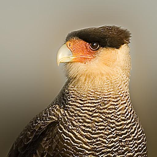 Birds of Patagonia