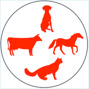 Animal Veterinary Drugs app review