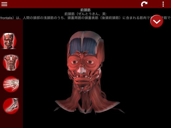 筋肉系3D(解剖学)のおすすめ画像1